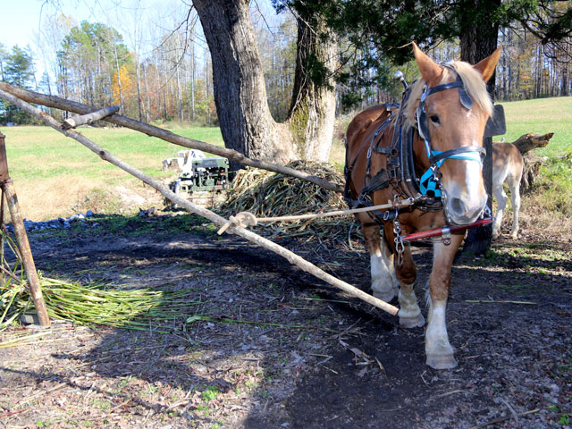 green creek farm day plow horse